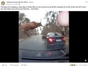 【海外発!Breaking News】道路を突っ切るシカの群れ 車を避ける必死の姿をカメラが捉えた(米)<動画あり>