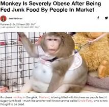 【海外発!Breaking News】ジャンクフードで超肥満になったサル 「このままでは命が危ない」(タイ)<動画あり>