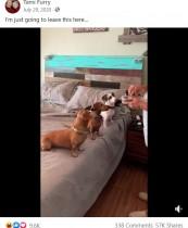 犬の世界にも超絶食いしん坊はいる! ずる賢くもなぜか凛々しい姿に大爆笑<動画あり>