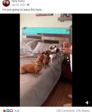 【海外発!Breaking News】犬の世界にも超絶食いしん坊はいる! ずる賢くもなぜか凛々しい姿に大爆笑<動画あり>
