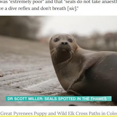 【海外発!Breaking News】英テムズ川で人気者だったアザラシが安楽死 襲い掛かった犬の飼い主に非難殺到<動画あり>