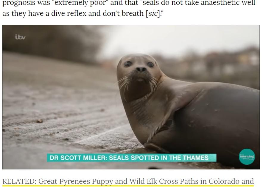 """""""フレディ・マーキュリー""""と呼ばれアイドル的存在だったアザラシ(画像は『People.com 2021年3月22日付「Seal Beloved by London Public and Dubbed Freddie Mercury Dies After Dog Attack」』のスクリーンショット)"""