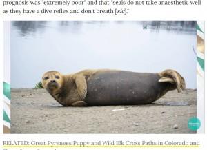 テムズ川のそばで日向ぼっこをするフレディは、多くの地元住民を虜に(画像は『People.com 2021年3月22日付「Seal Beloved by London Public and Dubbed Freddie Mercury Dies After Dog Attack」』のスクリーンショット)