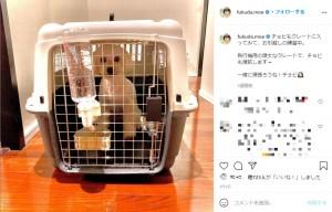 渡航に備えてクレートトレーニングをする福田萌の愛犬(画像は『福田萌 2021年2月5日付Instagram「チョビもクレートに入ってみて、お引越しの練習中。」』のスクリーンショット)