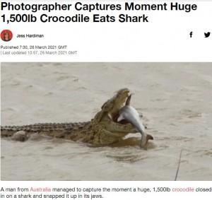 【海外発!Breaking News】獰猛なナイルワニ サメを頭から丸呑みに(南ア)