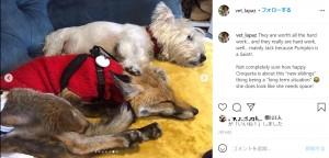 まるで妹のようにパンプキンを世話するジャック(画像は『Ana Lapaz-Mendez 2021年2月16日付Instagram「They are worth all the hard work」』のスクリーンショット)