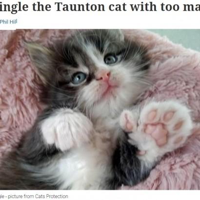 """【海外発!Breaking News】指が4本多い""""幸せをもたらす""""ネコが誕生 父や叔父も多指症(英)"""
