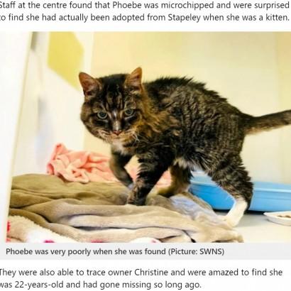 【海外発!Breaking News】20年前に行方不明になった猫が見つかる 最期は飼い主の愛情を受けて天国へ(英)