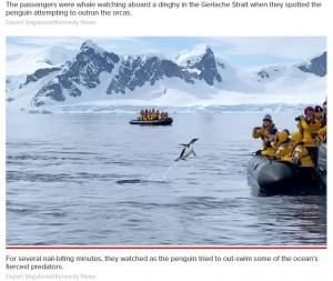 【海外発!Breaking News】シャチから逃げるペンギンが観光客のボートに自ら避難(南極)<動画あり>