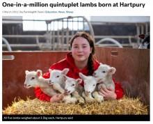 【海外発!Breaking News】100万分の1の確率で五つ子の羊が誕生 14年勤める飼育員も「見た事がない」と驚き(英)