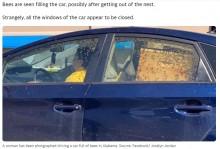 【海外発!Breaking News】車内に大量のミツバチが飛び交う驚きの光景 急ブレーキで巣箱から飛び出す(米)