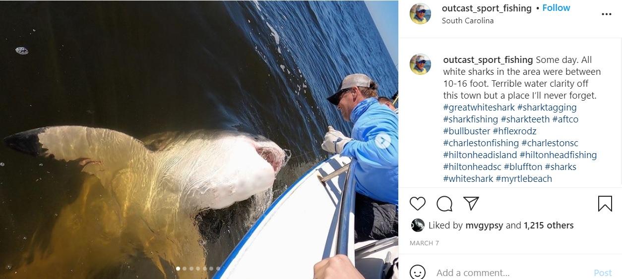 サメの調査をするスタッフ(画像は『Capt. Chip Michalove 2021年3月7日付Instagram「Some day.」』のスクリーンショット)