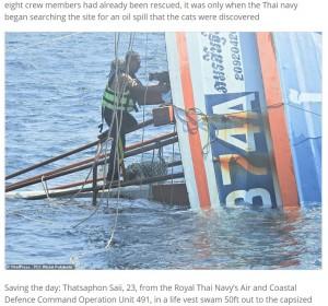 3匹の猫を米袋に入れ、1匹を肩に乗せて救出したザッツアホンさん(画像は『Express Informer 2021年3月3日付「Saved from cat-astrophe: Four cats are rescued from a sinking ship by Thai navy」(ViralPress / PO1 Wichit Pukdeelon)』のスクリーンショット)