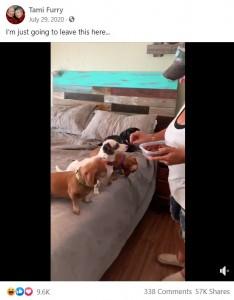 2度目のおやつをもらう犬(画像は『Tami Furry 2020年7月29日付Facebook「I'm just going to leave this here...」』のスクリーンショット)