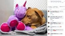 【海外発!Breaking News】ぬいぐるみが欲しくて何度も盗もうとした野良犬、保護された先でプレゼントされる(米)