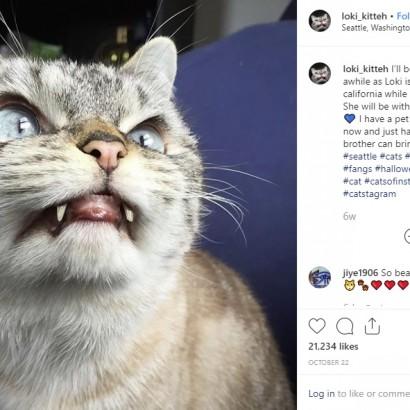"""【海外発!Breaking News】""""吸血鬼""""や""""悪魔""""と呼ばれる強面すぎる猫たち フォロワー数49万人超の人気者も"""