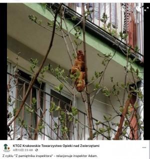 """【海外発!Breaking News】木に潜む""""謎の生物""""が住民を恐怖に陥れるも後にクロワッサンと判明(ポーランド)"""