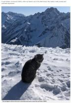 標高3000メートルの雪山で迷子になった猫 登山客を追いかけて3回も登頂(スイス)