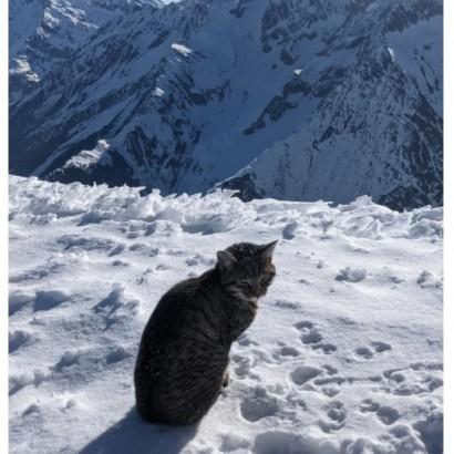 【海外発!Breaking News】標高3000メートルの雪山で迷子になった猫 登山客を追いかけて3回も登頂(スイス)