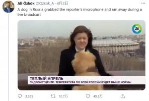 突然犬に飛びつかれたナジェジダさん(画像は『Ali Özkök 2021年4月2日付Twitter「A dog in Russia grabbed the reporter's microphone and ran away during a live broadcast」』のスクリーンショット)