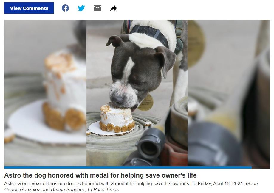 犬用ケーキをもらうと尻尾を振ってすぐに食べ始めたアストロ(画像は『El Paso Times 2021年4月19日付「El Paso Fire Department, Animal Services honor Astro the pit bull for helping save owner」』のスクリーンショット)