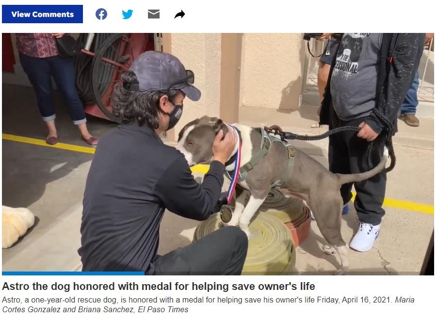 メダルを首に掛けてもらい、お礼のキスをするアストロ(画像は『El Paso Times 2021年4月19日付「El Paso Fire Department, Animal Services honor Astro the pit bull for helping save owner」』のスクリーンショット)