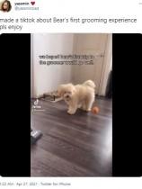 """初グルーミングで愛犬が""""不気味なピエロ""""に 「笑うしかなかった」と飼い主<動画あり>"""