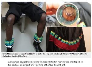 ジャケットの内側にもヘアカーラーを隠していたケヴィン(画像は『Metro 2021年4月28日付「Bird smuggler taped 35 live finches stuffed in hair curlers to his body for 5-hour flight」(Picture: US Attorney's Office for the Eastern District of New York)』のスクリーンショット)
