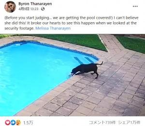 【海外発!Breaking News】「これぞ犬が思いやりの心を持つ証明」溺れる仲間を34分間かけて救出した保護犬(南ア)<動画あり>