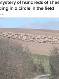 【海外発!Breaking News】いつもは騒がしいはずの羊の群れ 静まり返って謎のサークルを作りだす(英)