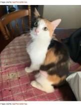 【海外発!Breaking News】飼育放棄できょうだいの被毛を食べていた栄養失調のネコ 回復して幸せに(豪)