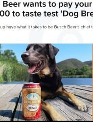 【海外発!Breaking News】犬用ビール開発のために犬の社員を募集 報酬はなんと200万円超(米)<動画あり>