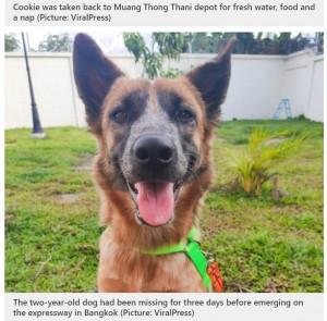 【海外発!Breaking News】高速道路に迷い込んだ犬 運転手がバスを止めて招き入れる(タイ)<動画あり>
