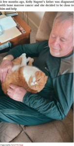 男性に甘えるスイート・ポテト(画像は『Bored Panda 2021年4月14日付「Cat Refuses To Leave The Side Of His Grandpa Who's Fighting Cancer」(Image credits: french75vintage)』のスクリーンショット)