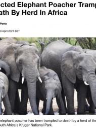 【海外発!Breaking News】サイを狙う密猟者、逃走するもゾウの群れに踏み殺される(南ア)