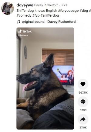 【海外発!Breaking News】引退した警察犬に「コカイン」と呼びかけ 瞬時に仕事モードへ(豪)<動画あり>