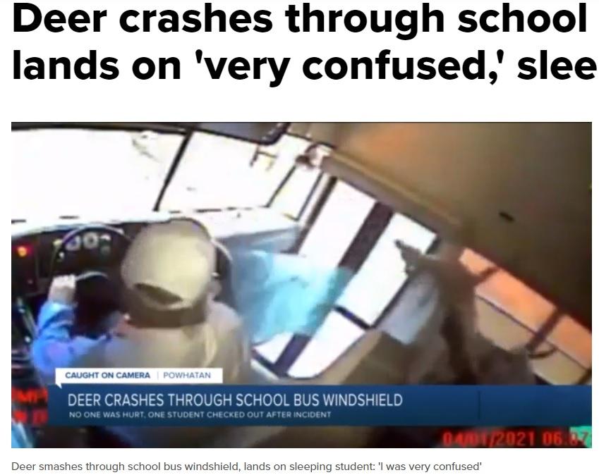 フロントガラスを突き破った鹿(画像は『WTVR.com 2021年4月2日付「Deer crashes through school bus windshield, lands on 'very confused,' sleepy student」』のスクリーンショット)