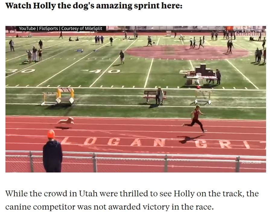 ホーリーは3人の選手を追い抜くと、グレイシーさんを猛追(画像は『Insider 2021年4月23日付「A very speedy dog snuck into a high school relay race and ran the final 100m almost as fast as an Olympic sprinter」』のスクリーンショット)