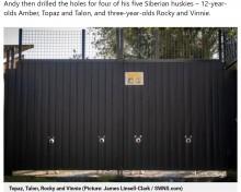 【海外発!Breaking News】黒い門に開けられた小さな丸い穴 そこから覗く犬の姿が大人気に(英)