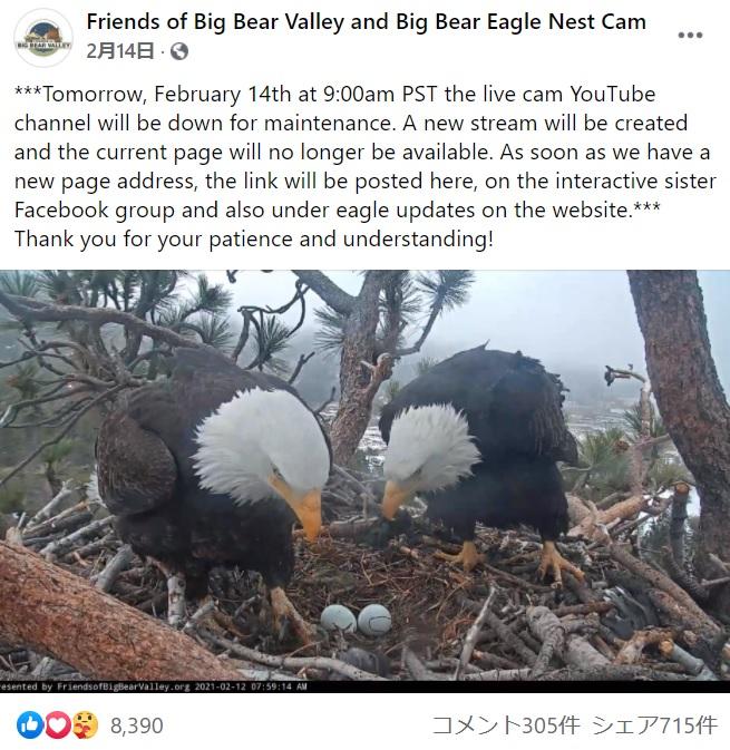 卵を見守るハクトウワシのつがい(画像は『Friends of Big Bear Valley and Big Bear Eagle Nest Cam 2021年2月14日付Facebook「***Tomorrow, February 14th at 9:00am PST the live cam YouTube channel will be down for maintenance.」』のスクリーンショット)