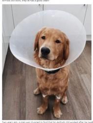 【海外発!Breaking News】AirPodsをケースごと丸飲みした犬が緊急手術へ(英)