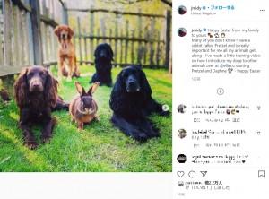 """ウサギの""""プレッツェルくん""""と愛犬達(画像は『James Middleton 2021年4月5日付Instagram「Happy Easter from my family to yours」』のスクリーンショット)"""