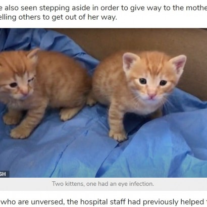 【海外発!Breaking News】我が子をくわえ動物病院に助けを求めた野良猫(トルコ)<動画あり>