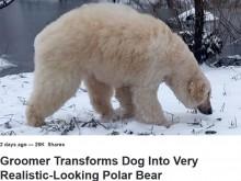 【海外発!Breaking News】「人間は残酷」ホッキョクグマからピカチュウまで 犬を変身させる飼い主たち