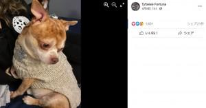 ティファニーさんの家に来た時、カシミヤのセーターを着ていたプランサー(画像は『Tyfanee Fortuna 2021年4月8日付Facebook「Ok, I've tried.」』のスクリーンショット)
