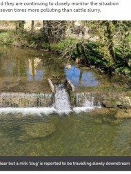 【海外発!Breaking News】約3万リットルの牛乳を積んだトラックが横転 川が真っ白に染まり牛乳の滝まで出現(英)<動画あり>