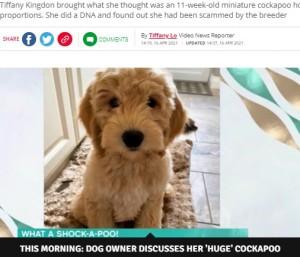 【海外発!Breaking News】小型犬のはずが1年で体重32キロに! ブリーダーに騙されるも飼い主「手放すことはないわ」(英)