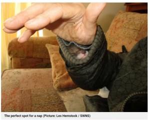 レスさんに初めて会い、袖の中に潜り込む子ギツネ(画像は『Metro 2021年4月7日付「Man adopts rescue fox after it crawls into his jacket sleeve for a snooze」(Picture: Les Hemstock / SWNS)』のスクリーンショット)