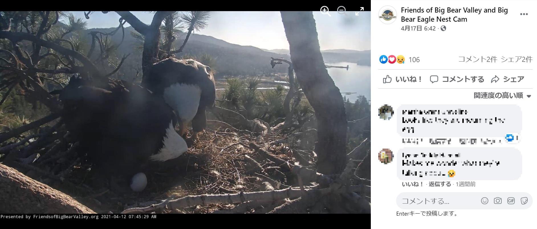 ついに2つ目の卵も孵らず、2羽は温めるのを止めた(画像は『Friends of Big Bear Valley and Big Bear Eagle Nest Cam 2021年4月17日付Facebook「Jackie & Shadow continue visiting the nest each day for short periods of time.」』のスクリーンショット)