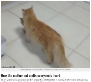 子猫をくわえて診察室までやって来た母猫(画像は『StarBiz 2021年3月31日付「Mother Cat Carries Her Kitten To The Hospital For Help」(NEWSFLASH)』のスクリーンショット)